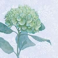 Blue Hydrangea I Crop Framed Print