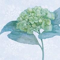 Blue Hydrangea II Crop Fine Art Print