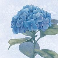 Blue Hydrangea IV Crop Framed Print