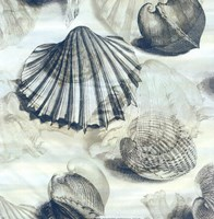 Shell engraving 1 Fine Art Print