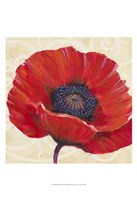 Red Poppy I Framed Print