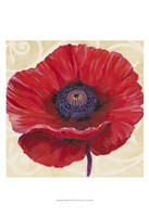 Red Poppy II Framed Print