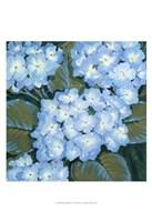Blue Hydrangeas I Fine Art Print