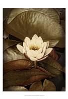 Lily Pad Single Framed Print