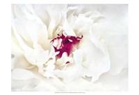 White Linen Peony II Fine Art Print