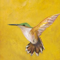Sweet Hummingbird II Fine Art Print