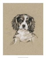 Breed Sketches III Framed Print