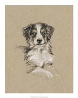 Breed Sketches IV Framed Print