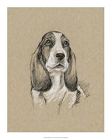 Breed Sketches VI Framed Print