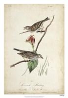Delicate Bird and Botanical III Framed Print