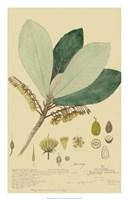 Tropical Descubes I Fine Art Print