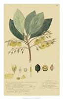 Tropical Descubes II Fine Art Print