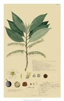 Tropical Descubes III Fine Art Print