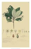 Tropical Descubes IV Fine Art Print
