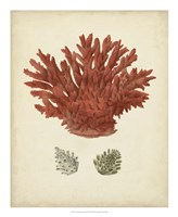Antique Red Coral III Framed Print