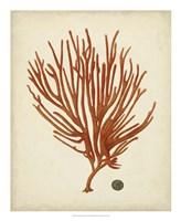 Antique Red Coral IV Fine Art Print