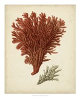 Antique Red Coral V Framed Print