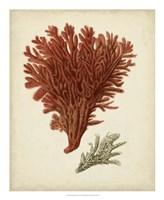 Antique Red Coral V Fine Art Print