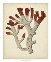 Antique Red Coral VI Framed Print