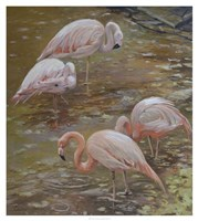 Pink Passion Fine Art Print