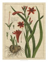 Botanical Study on Linen II Framed Print