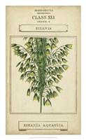 Linnaean Botany I Framed Print