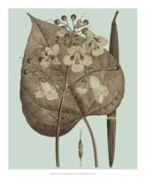 Flowering Trees II Framed Print