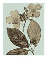 Flowering Trees III Framed Print