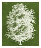 Modern Arbor I Framed Print