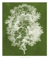 Modern Arbor IV Framed Print