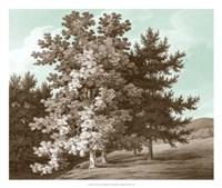 Serene Trees I Fine Art Print