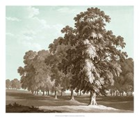 Serene Trees II Fine Art Print