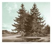 Serene Trees III Fine Art Print