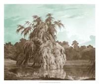 Serene Trees V Fine Art Print