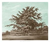 Serene Trees VI Fine Art Print