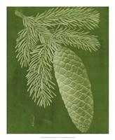 Modern Pine IV Framed Print