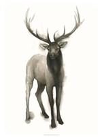 Majestic Wildlife II Framed Print