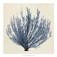 Coastal Seaweed III Framed Print