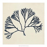 Coastal Seaweed VI Framed Print
