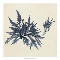 Coastal Seaweed VII Fine Art Print