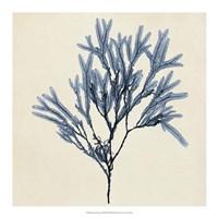 Coastal Seaweed VIII Fine Art Print