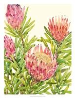 Watercolor Tropical Flowers II Framed Print