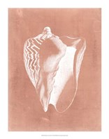 Sealife on Coral I Framed Print