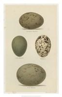 Antique Bird Egg Study V Fine Art Print