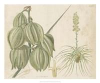 Tropical Curtis Botanical I Framed Print
