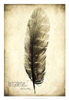 Feather on the Wind I Fine Art Print