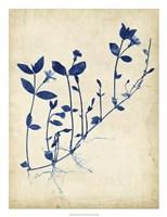 Indigo Leaf Study II Framed Print