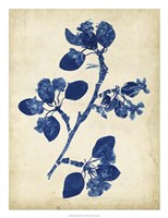 Indigo Leaf Study IV Fine Art Print