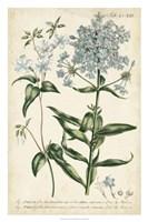 Chambray Botanical II Fine Art Print
