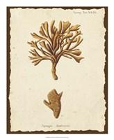 Natura Coral IV Framed Print
